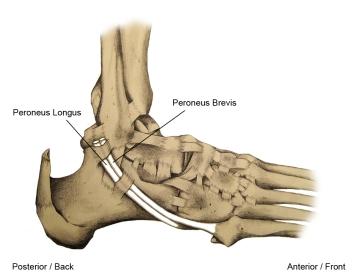simptomele tratamentului cu artroza genunchiului artrita falangei tratamentului degetelor mari
